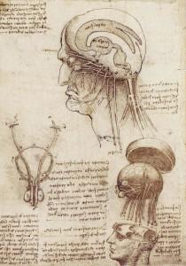 регенерация организма | мозг