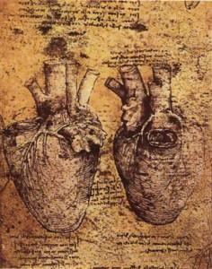 обновление органов | сердце