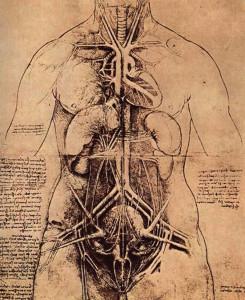 обновление органов | печень | почки | лёгкие | сердце