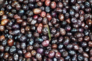 чёрные оливки