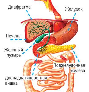 split meals   дробное питание