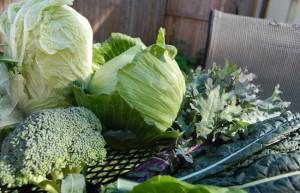 9 cancer-killing products   9 продуктов убивающие рак   крестоцветные овощи