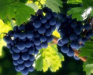 9 cancer-killing products   9 продуктов убивающие рак   виноград   ресвератрол