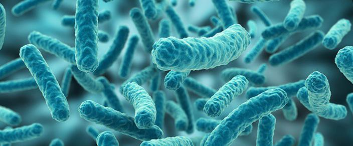 Bacterias | микробиом | юл иванчей | микробиот | human microbiome