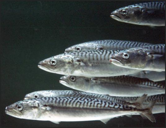 ртуть в рыбе | юл иванчей | мифы и реальность | mercury