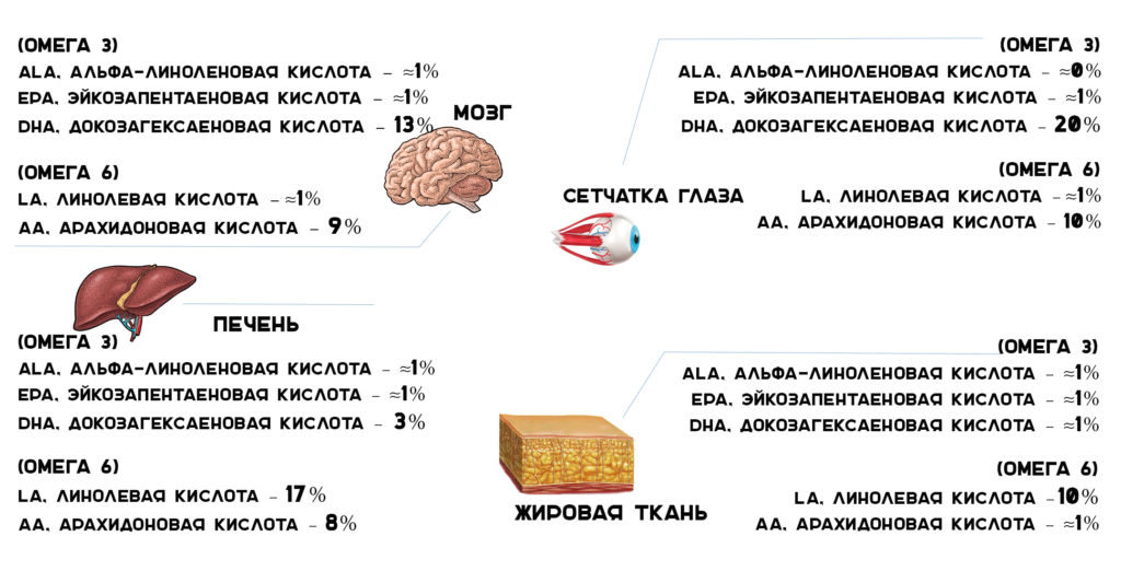 омега 3 | омега 6 | содержание в органах жирных кислот | юл иванчей | блог