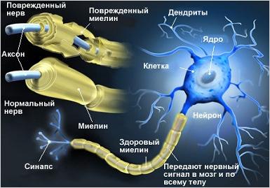 Функции Жиров | Миелин | Биохимия для чайников | Юл Иванчей